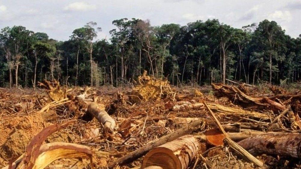Foto da Amazônia desmatada, chegando ao maior índice nos últimos 12 anos.